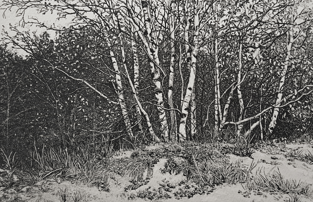 Birches and Dunes