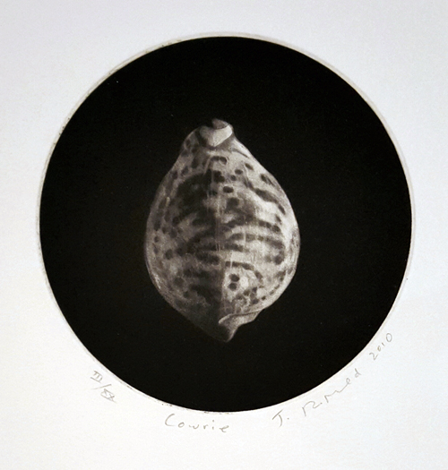 "Cowrie Mezzotint Engraving this image is from Judith's fine art book ""Nacre"" 50 impressions were made for the book plus 20 ""loose"" prints numbered using Roman numerals  image size approx: 4 7/8"" round unframed price $250.00"