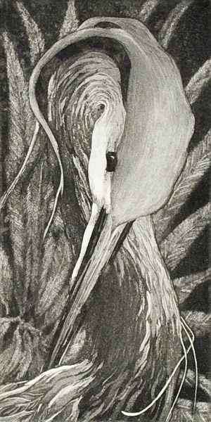 "Etching by Beki Killorin edition of 350 Image size: 3 1/2"" x 7"" Price: $120.00"