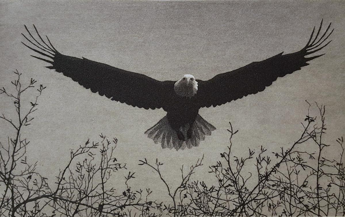 Eagle by Stephen McMillan