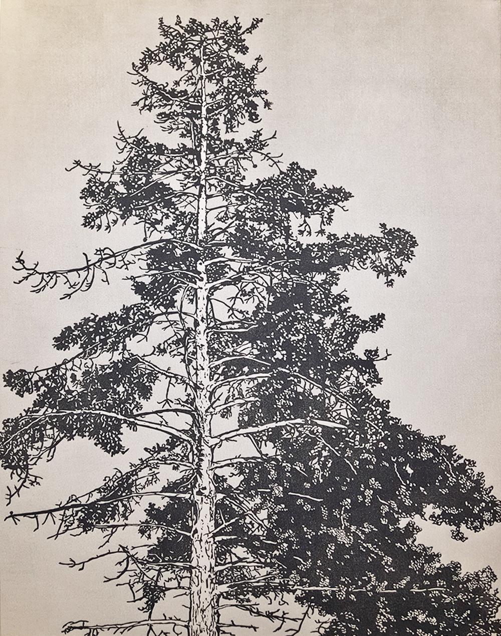 Arboreal (Redwood)