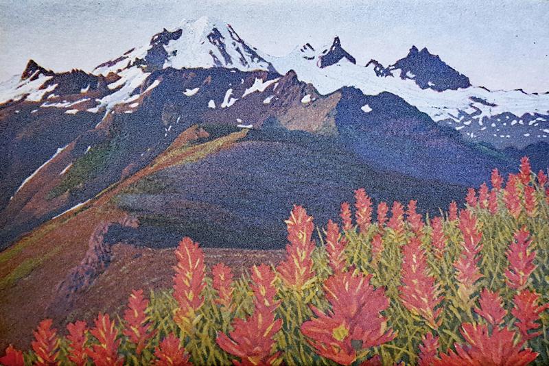 Mountain Paintbrush