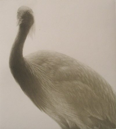 Featheed Light III