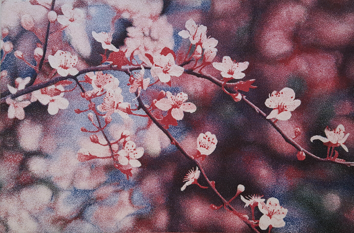Spring Blossoms by Stephen McMillan