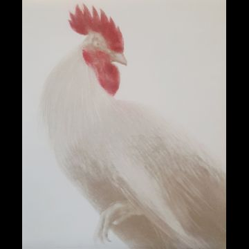 Coq d'or (Golden Rooster)