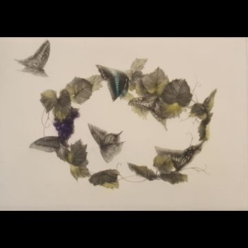 Kisvin papillons