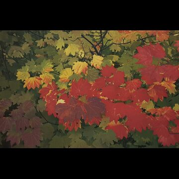 Fall Color by Stephen McMillan